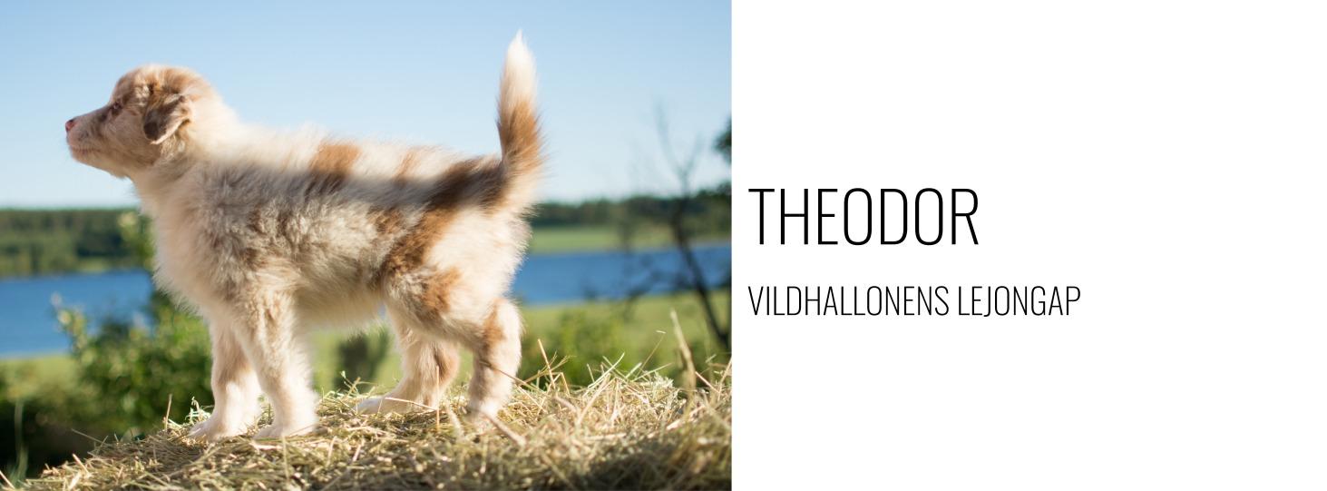 Hundlänk - Theodor.jpg