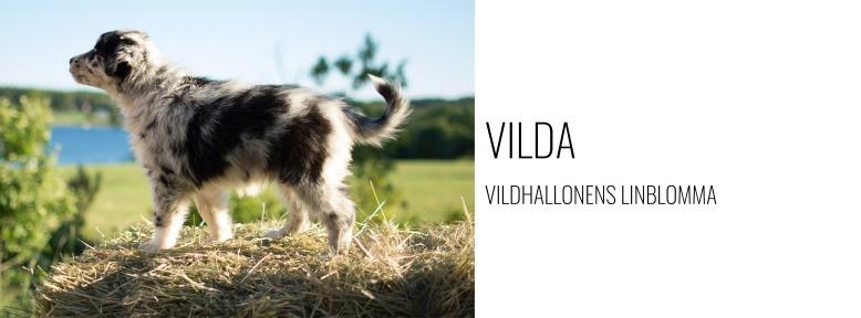 Hundlänk - Vilda.jpg